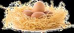 nest egg, eggs