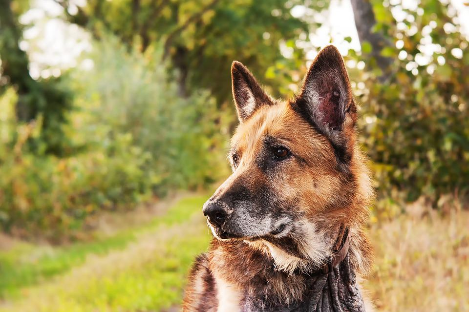 Dog Mammals Animal Kingdom 183 Free Photo On Pixabay