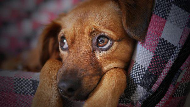 closeup photography of brown puppy