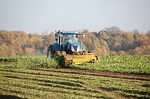 tractor, field, harvest