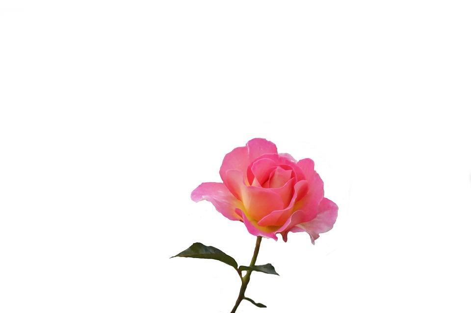 Flor La Naturaleza Planta · Foto gratis en Pixabay