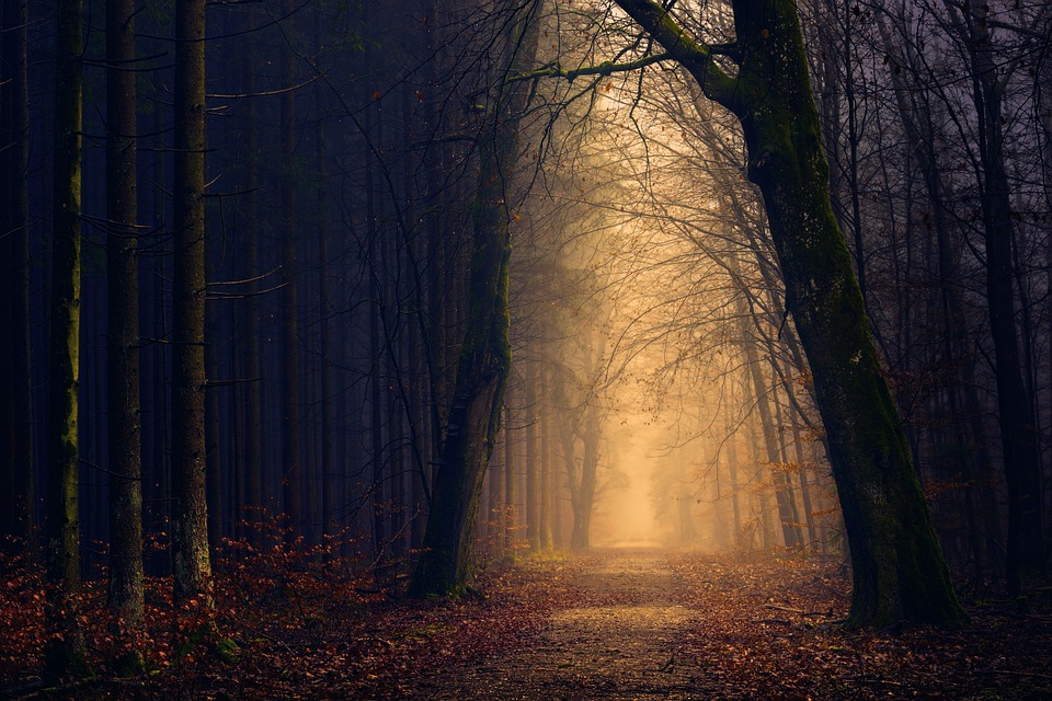 Holz, Wald, Licht, Baum, Dunkelheit, Geheimnis