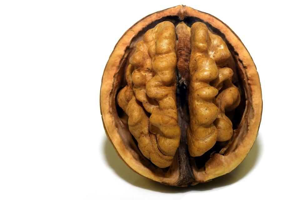 Noce, Dado, Conchiglia, Nutshell, Open, Cervello, Testa