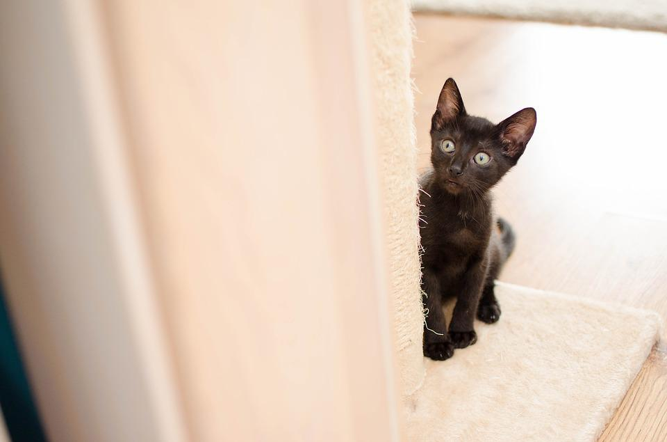velká černá kočička vids thajské gay porno