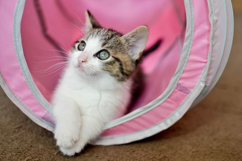 Kot Domowy Dachowiec Mały Darmowe Zdjęcie Na Pixabay