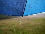 rain, nature, wet