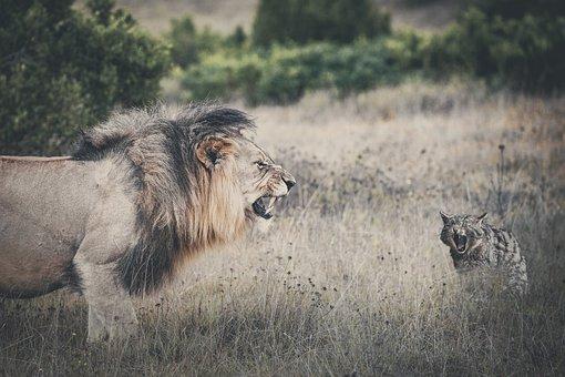 100+ Free Roaring Lion & Lion Images - Pixabay