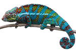 reptile, lizard, animal