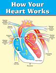 vertical, heart