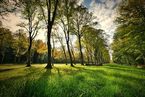 Landscape, Trees, Park, Nature, Grass