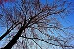 tree, tree top