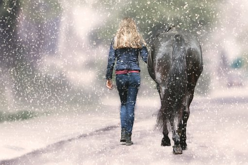 Action, Winter, A, Spray, Adult, Horse