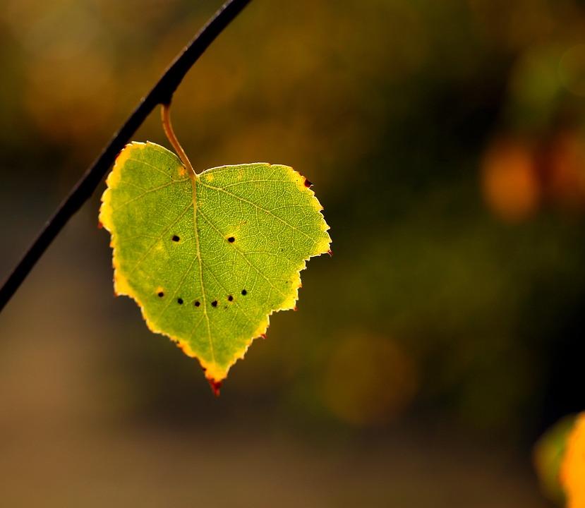 Imagini pentru Zâmbet din... frunze
