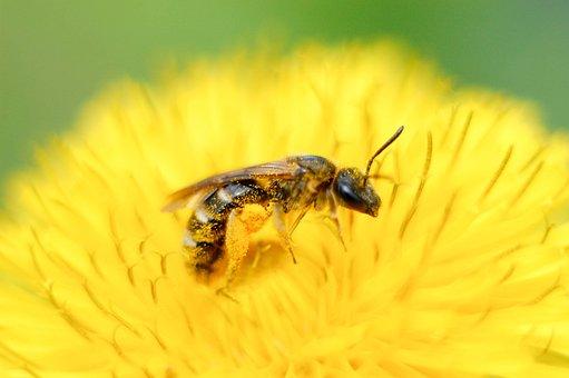 自然, 昆虫, 無, 蜂, 屋外で, 動物, 翅, ブルーム, 座りの花, 休暇
