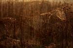 cobwebs, autumn