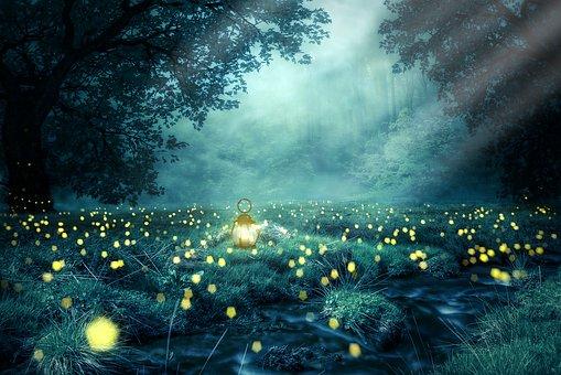 Nacht, Wald, Glühwürmchen, Licht