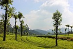 landscape, nature, tree