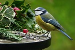 nature, animal, bird
