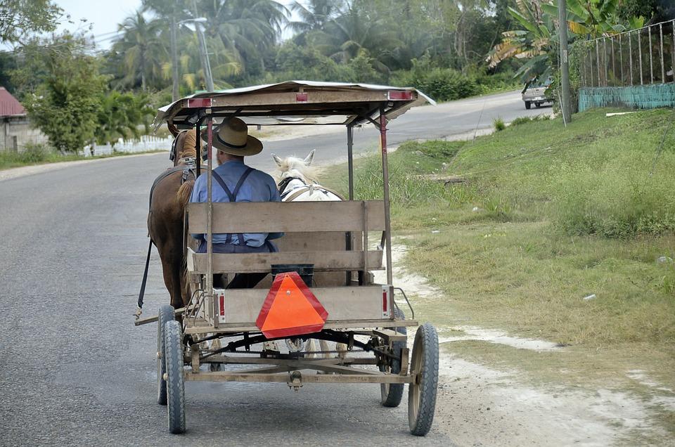 Ameryka Środkowa, Belize, Zaprzęgi Konne Przewozu