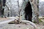 tree, fairy tale, tinderbox