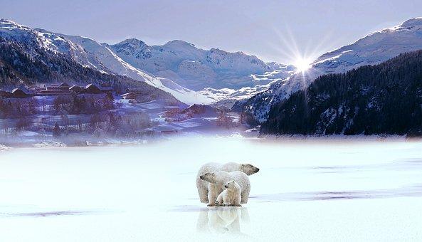山, 雪, 白熊, 冬天, 玻璃, 太阳, 冬天风景, 景观, 性质, 冰皮月饼