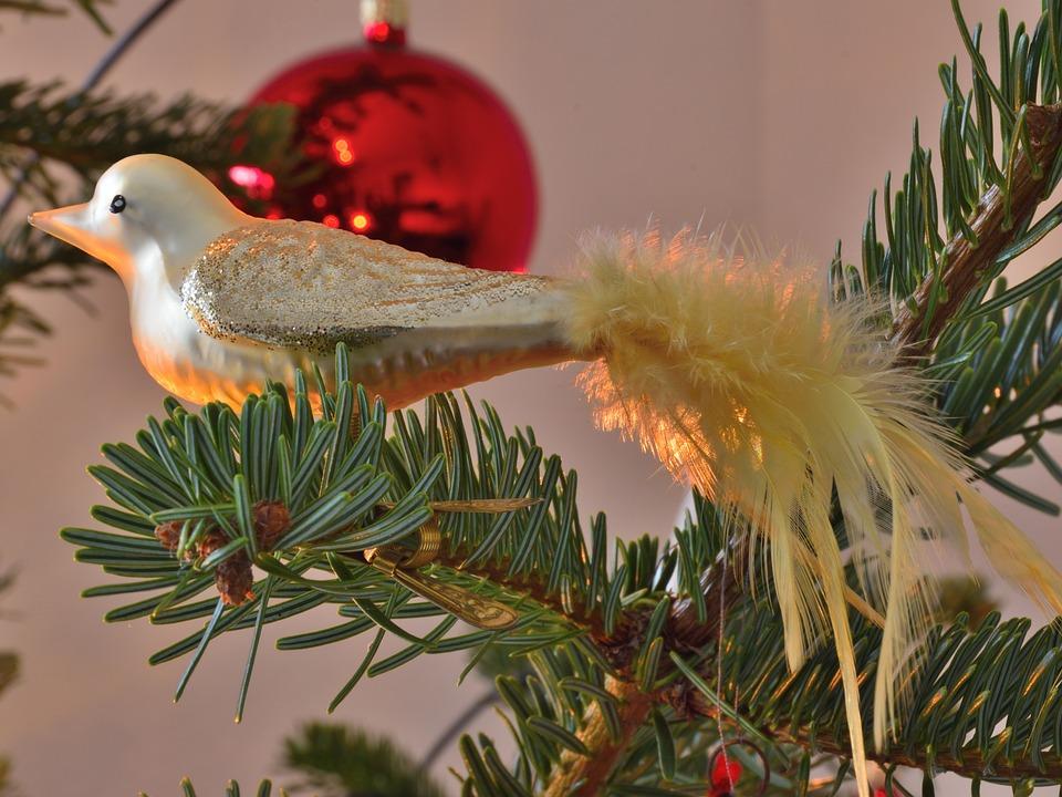 Christbaumschmuck Vogel Tannenbaum Kostenloses Foto Auf Pixabay