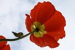 flower, nature, petal