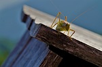 wood, insect, nature