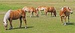 horses, light brown