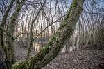 tree, wood, nature