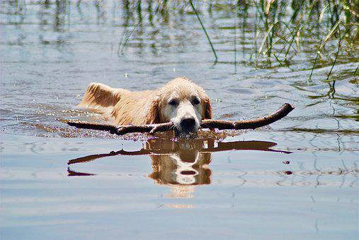 Dierlijke, Water, Natuur, Hond