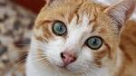 nice, animalia, cat