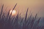 nature, sun, grass