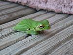 frog, green, rest