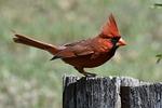 wildlife, bird, nature