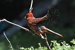 nature, wildlife, bird