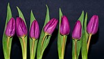purple, violet, flowers