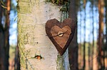 heart, emotions, valentine's day