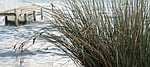 lake, reed, web
