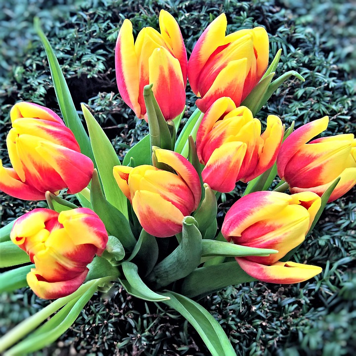 Flowers tulips spring free photo on pixabay flowers tulips spring flowers yellow red flowers mightylinksfo Image collections