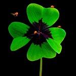 nature, luck, symbol