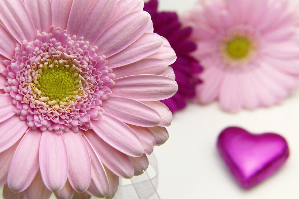 花, 植物, 花弁, 自然, バレンタインデー, 愛, 与える, 招待状, グリーティング カード