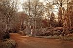 lane, park, landscape