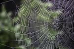 spider, cobweb, case