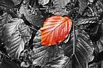 leaf, foliage, twig
