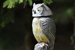 nature, animal world, bird