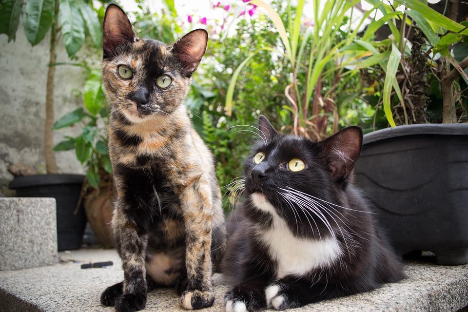 00c26b826934 Θηλαστικό Ζώο Γάτα Κατοικίδιο - Δωρεάν φωτογραφία στο Pixabay