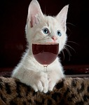 cat, cute, kitten