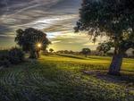tree, landscape, field