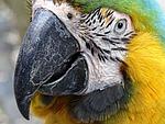 ara, bird